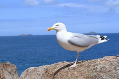 Gull (Victoria Helson photography) Tags: sea sun gull