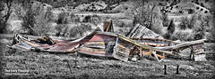 May 19 2016 - Barn has collapsed but sheep still enjoying it (lazy_photog) Tags: old barn photography big sleep failure aaron basin anderson lazy ten weathered wyoming horn elliott photog collapsed caved 051916tensleepbarnfinallydown