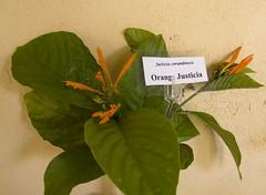 Orange Justicia