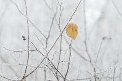 A winter day... (RKAMARI) Tags: winter cold art ice nature beautiful closeup last softness minimalism frosted muted contepmlative