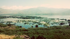 Pelecanus onocrotalus (dimitris1914) Tags: nationalpark prespes greece albania fyrom life junex landscape nature bird