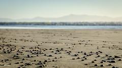 Oreti Beach with Stewart Island in the background (Kathrin & Stefan) Tags: ocean newzealand sky beach nature island sand outdoor shell southisland tasmansea nzl invercargill rakiura stewartisland foveauxstrait oretibeach