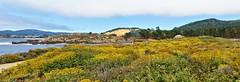 Point Lobos View (GeminEye27) Tags: pointlobos ocean sea seascape carmel montereypeninsula pacificocean