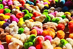 Happy Eastern (Once Around The World) Tags: chicken colorful morocco chicks fs