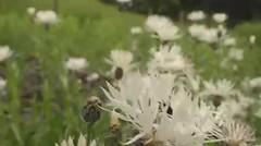 The Hive At Kew Gardens Opening Day @ 18 June 2016 (01/55) : 1-Minute Video (Kam Hong Leung  KEW Gardens_01) Tags: beatriceleung kam kamhongleung leungkamhong brianpitcher carlosmagdalena plantmessiah elibiondi kew kewgardens royalbotanicgarden botanicgarden rbgkew rbg london richmond garden friendofkew waterlilyhouse rockgarden plantfamilybeds daviesalpinehouse wolfgangbuttress thehive hive bee bumblebee honey pollination pollinator architecture yourkew naturalneighbourhood biodiversity glasshouse greenhouse plant flora fauna wildlife flickr twitter broadwalk girl boy mother father parent child kid couple lover marriage proposal