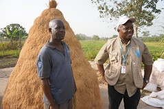 Heap of rice (FAOemergencies) Tags: africa rice farmers liberia fao ebola emergencies ruralcommunities ebolaoutbreak