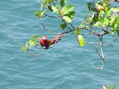hula hoop sat 011 (Learn, Love, Conserve) Tags: hulahoop saprissa puntaleona feriaverdearanjuez