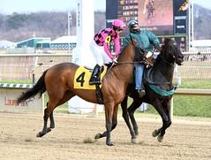 2015-01-02 (60) r4 Michael Ritvo on #4 Vale Ridge (JLeeFleenor) Tags: photos photography md marylandracing marylandhorseracing jockeys jockey   jinete  dokej jocheu  jquei okej kilparatsastaja rennreiter fantino    jokey ngi horses thoroughbreds equine equestrian cheval cavalo cavallo cavall caballo pferd paard perd hevonen hest hestur cal kon konj beygir capall ceffyl cuddy yarraman faras alogo soos kuda uma pfeerd koin    hst     ko  maryland