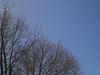A Question of Balance — Spring 2015 (Paul Henegan) Tags: trees sky spring f56 taijitu mamiya645afd mamiyasekorc128f70mmsn12093
