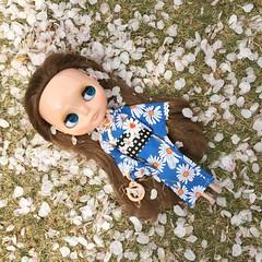 Sakura x Blythe