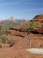 tree and rocks (arvin1975) Tags: arizona spring sedona april 2015