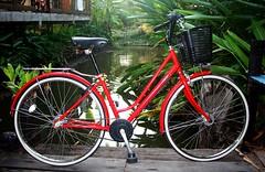 bike bicycle drive belt bridgestone veltro relaxybike