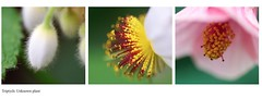 Unknown (Hannah Cooper.) Tags: plant flower detail macro beauty up insect photography close bud triptychs