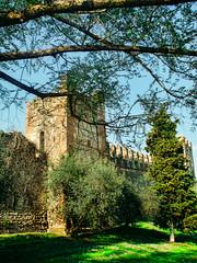 Il castello di Lazise (riccardo_fontanari) Tags: italy verde green castle nikon italia castello rocca lazise