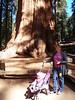General Sherman Tree (traveling peter) Tags: california ca wood shadow usa tree green america standing forest march nationalpark beige purple stroller daughter treetrunk trunk wife sierranevada sequoia sophia sequoianationalpark familiy generalsherman 2015 generalshermantree meggiev year2015
