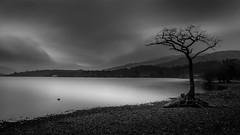 Milarrochy Tree (Euan Ross (circa35mm)) Tags: park longexposure trees winter lake water landscape scotland loch lochlomond milarrochybay milarrochy