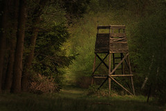 The Third Watchtower (Nogatron) Tags: forest canon dark eerie watchtower eos1100d