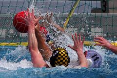 47_R.Varadi_R.Varadi (Robi33) Tags: summer men sports water swimming ball fight action basel swimmingpool watersports waterpolo sportspool waterpolochampionship
