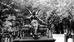 Familygrave.. (LamiaDeTenebris) Tags: blackandwhite bw friedhof grave graveyard angel germany sw engel grab augsburg schwarzweis familygrave familiengrab