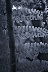 Glorious Patterns (ROPhoto77) Tags: plants abstract fern macro monochrome leaves leaf cloudy bokeh outdoor decorative