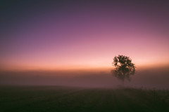 Fenland in the Mist (Adam_Marshall) Tags: adam marshall sky landscape sunset trees goldenhour twilight stereocolours outdoors fog sawtry pink nature field adammarshall mist vast open wilderness empty cold canon eos70d sigma 1750mmf28 countryside cambridgeshire