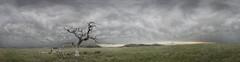 Dead Tree on Prairie (Pragmatic1111) Tags: sky cloud mountain storm flower tree oklahoma grass arbol nikon flor peaceful cielo tormenta serene lonely prairie grassland nube solitario pacifico pradera montanya cesped wichitawildliferefuge sereno d700 1635mmf4