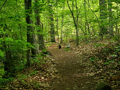 Path through woods (pilechko) Tags: trees color green woods pennsylvania path newhope bowmanshill