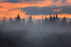 Evening Mist (Alan MacKenzie) Tags: trees sunset mist weather silhouette fog forest plane airport