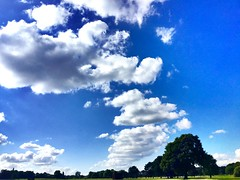 Look up to infinity (semonalarochelle) Tags: above park sky colour tree green nature grass clouds landscape path infinity sunnyday beautifulday localpark