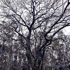 Maraa (Mar Goizueta) Tags: bosque forest enredadera country nature naturaleza