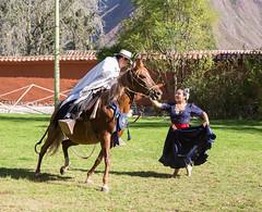Peruvian Paso Horse (cheryl strahl) Tags: horse peru southamerica dancer sacredvalleyoftheincas urubambavalley huayllabamba peruvianpasohorse huayoccarihacienda haciendahuayllabamba orihuelafamily