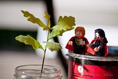 Plant your tree, watch them grow (fbiluthien) Tags: legothorin legobilbo thehobbit lego acorns tinybagginshield tinyoak