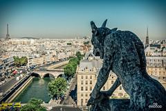Notre-dame de Paris (brenac photography) Tags: blue sky paris france church seine river nikon îledefrance cityscape view daytime fr diable cmn chimere d810 nikond810 brenac brenacphotography