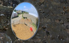 Mirror on the wall - Pembrokeshire Farm 160516 (3) (Richard Collier - Wildlife and Travel Photography) Tags: wall mirrow reflection pembrokeshire farm wales farmyard view image