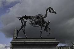 Haacke Horse 3 SDIM1499 (StefanSzczelkun) Tags: horse skeleton political trafalgarsquare publicart haacke fourthplinth