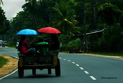 mode of travel (mithra srilanka) Tags: umbrella transport sunny srilanka roadway higway handtractor