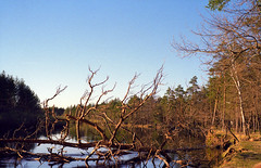 IMG14 (Kirill Gutin) Tags: film forest river russia bessa bank slide velvia shore 100 nokton 3514 r2a