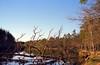 IMG14 (Kirill Gutin) Tags: film forest river russia bessa bank slide velvia shore 100 nokton 3514 r2a