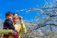 Harry_23326,,,,,,,,,,,,,,,,,,,,,,,Plum,Plum Tree,Tree,Fruit,Farm (HarryTaiwan) Tags: tree fruit nikon farm plum taiwan     plumtree  d800                       harryhuang  hgf78354ms35hinetnet adobergb