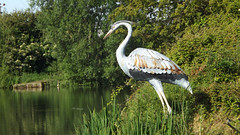 Photo of HERONS STAND VERY STILL...