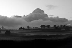 Clouds (sparksy2k14) Tags: trees blackandwhite mist clouds landscape nikon sheep fluffy fields dartmoor d3