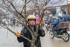 Vietnamese man carries a peach tree at the market in Sapa (Rolf_52) Tags: vietnam sapa