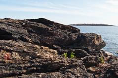 I will grow where ever I can (Lojones13) Tags: plant newyork water rock bronx twinisland