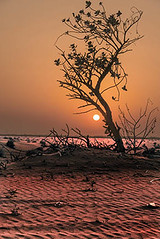 Desert Sunset Dubai (saleem shahid) Tags: