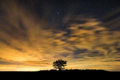 Minimal Tree (RobertoGomezFotografia) Tags: sky tree night clouds contraluz stars arbol noche photo nikon estrellas nocturna approved nocturnas contra tetric d800e nikond800e