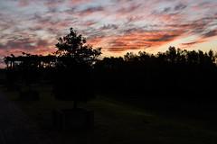(martinnarrua) Tags: sunset sun tree sol argentina del clouds uruguay atardecer nikon rboles cloudy nubes rbol concepcin entre tres nublado ros amateur nikond3100