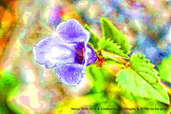 Flowering vine (NancySmith133) Tags: painterly photopainting floweringvine backyardgardens orangecountyfl centralfloridausa photopaintingflowers