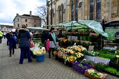 England 2016  Stamford  Market (Michiel2005) Tags: uk greatbritain england market unitedkingdom britain lincolnshire stamford markt flowermarket engeland bloemenmarkt vk grootbrittanni verenigdkoninkrijk