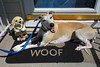Woof (DiamondBonz) Tags: dog pet smile hound whippet mat welcome spanky