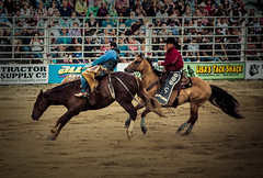 Bronc Riding (indigo_veil) Tags: rodeo bronc cowtownrodeo